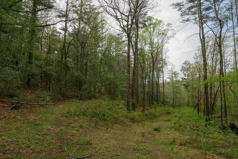 Foster Creek Trail -- 2,300'