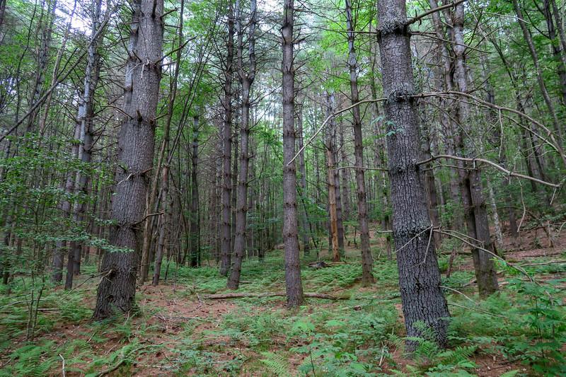 Grassy Road Trail -- 2,590'