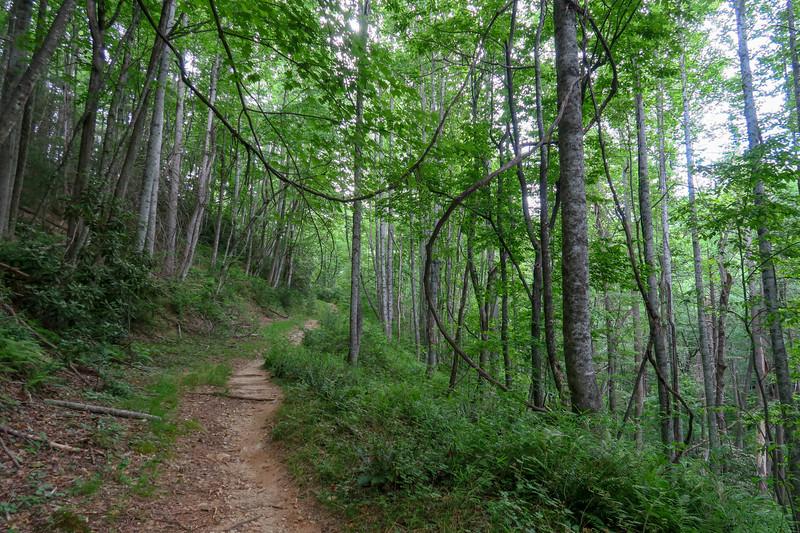 Grassy Road Trail -- 2,530'