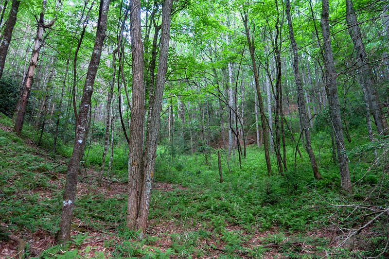 Grassy Road Trail -- 2,550'