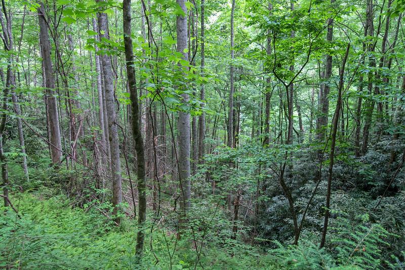 Grassy Road Trail -- 2,500'