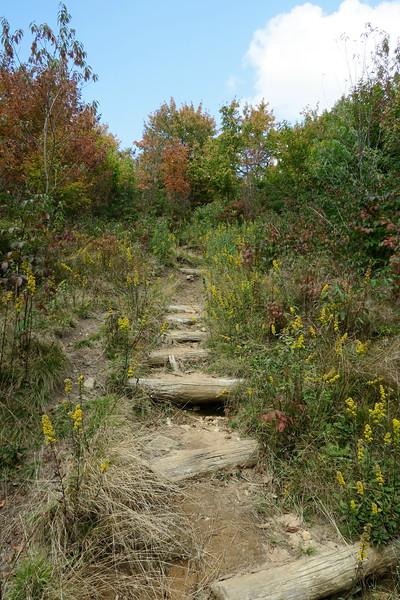 Graveyard Fields Connector Trail -- 5,080'