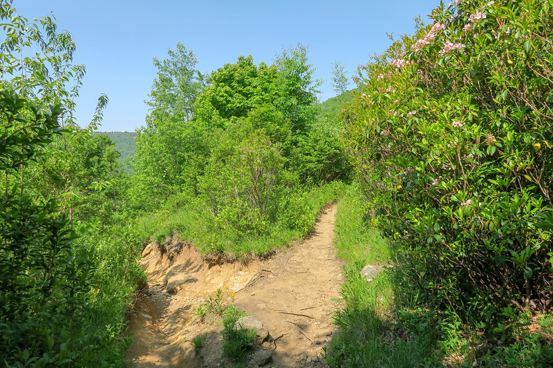 Graveyard Ridge/Graveyard Ridge Connector Trail Junction -- 5,230'