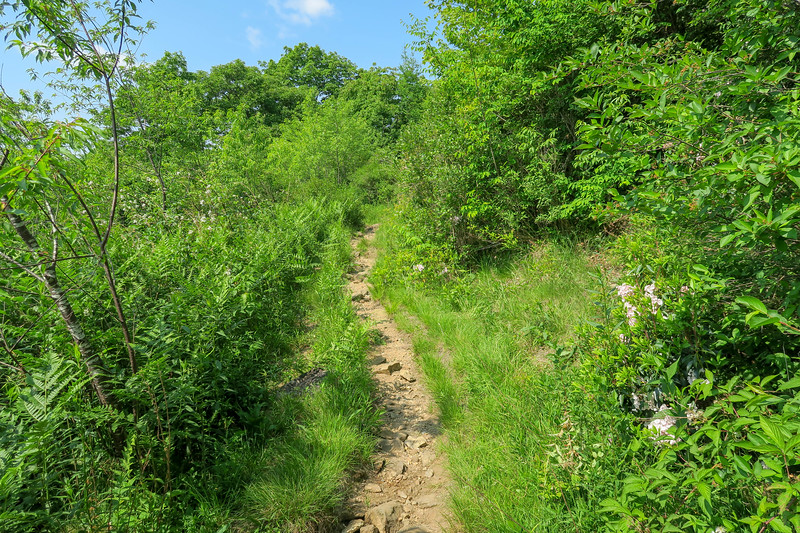 Graveyard Ridge Trail -- 5,280'
