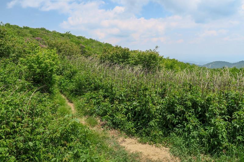 Greasy Cove Trail -- 5,700'