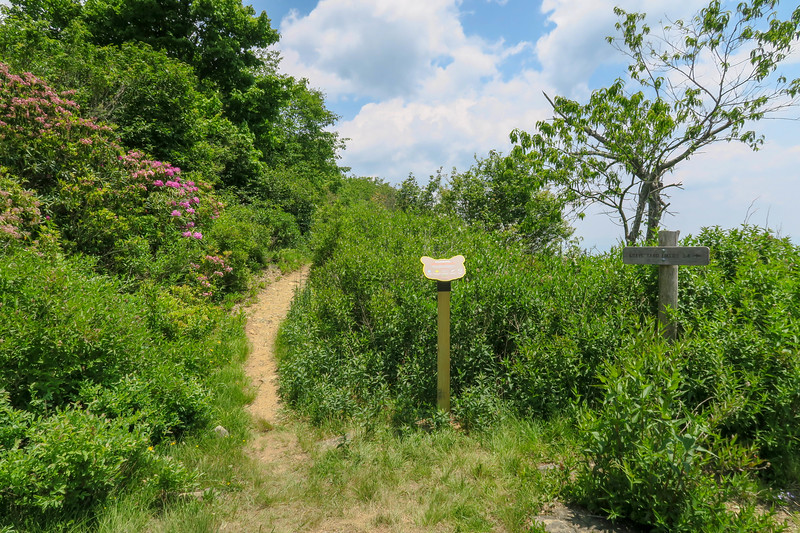 Greasy Cove/Graveyard Ridge Trail Junction -- 5,650'