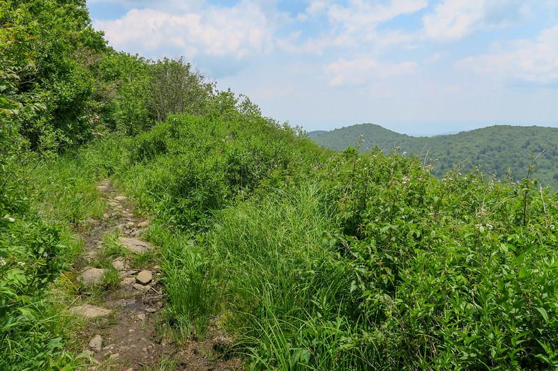 Greasy Cove Trail -- 5,650'
