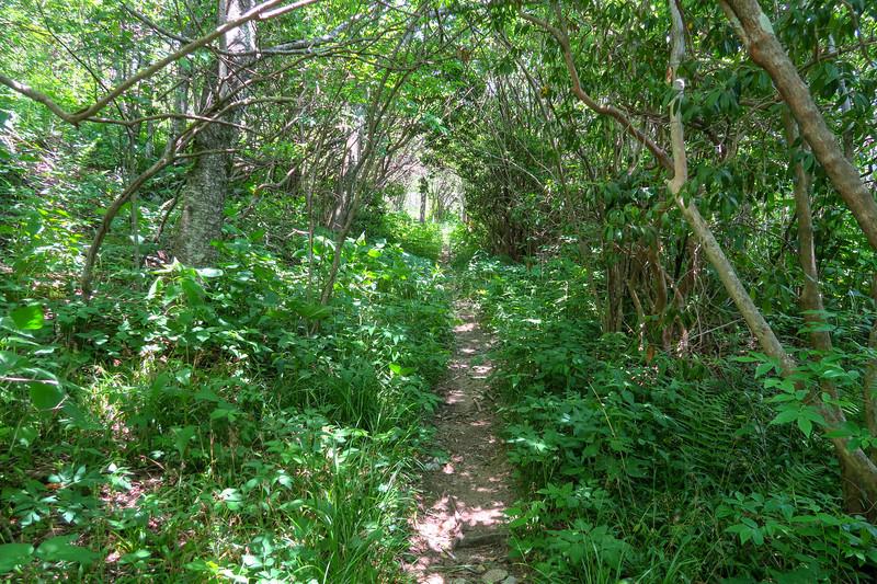 Greasy Cove Trail -- 5,680'