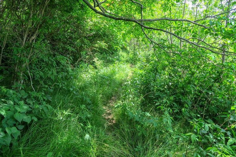 Greasy Cove Trail -- 5,660'