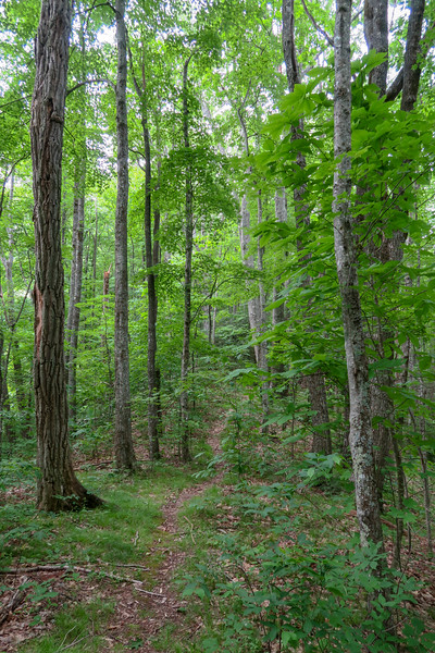 Green Mountain Trail -- 3,560'