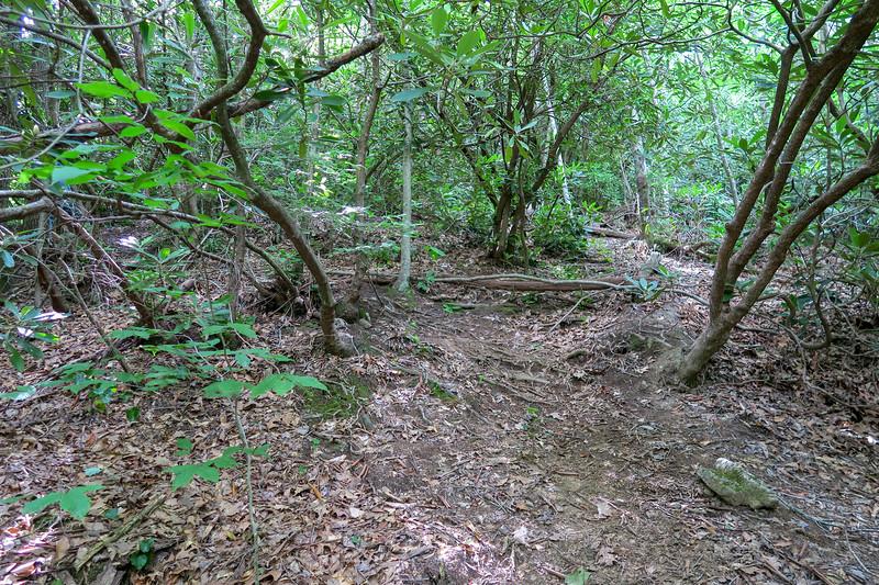 Green Mountain Trail -- 3,120'