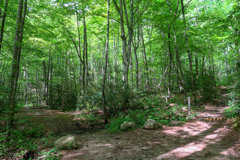 Green's Lick/Forest Road 479G/Sidehill Trail Junction -- 2,550'