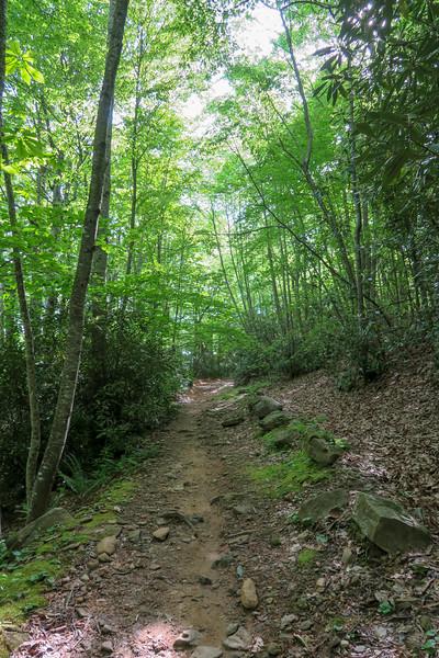 Green's Lick Trail -- 2,600'