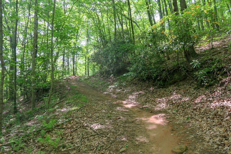 Green's Lick Trail -- 2,640'