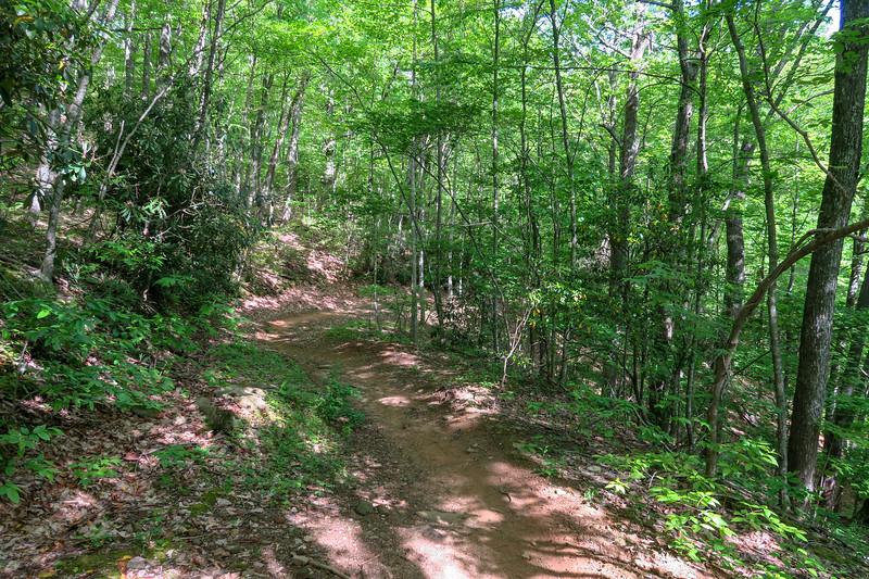 Green's Lick Trail -- 2,650'