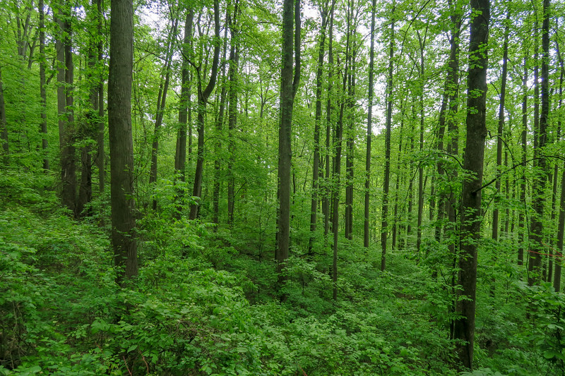 Green's Lick Trail -- 3,100'
