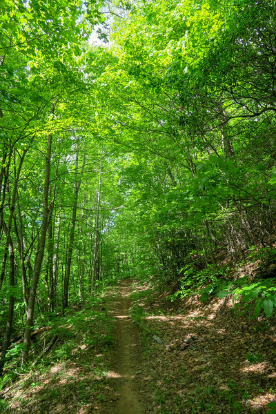 Green's Lick Trail -- 2,820'