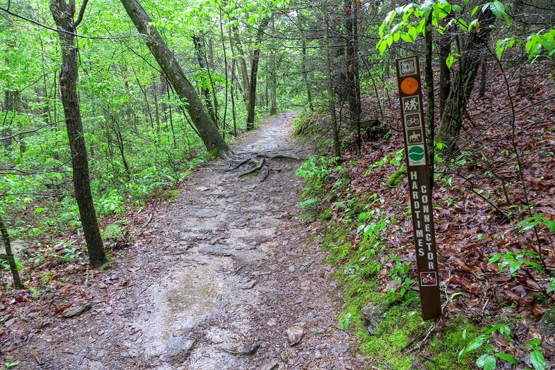 Hardtimes Connector/Deer Lake Lodge Trail Junction -- 2,140'
