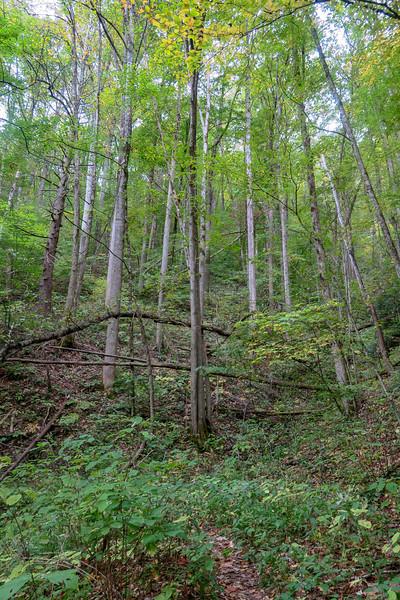 Haywood Gap Trail -- 3,780'