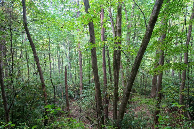 Haywood Gap Trail -- 3,660'