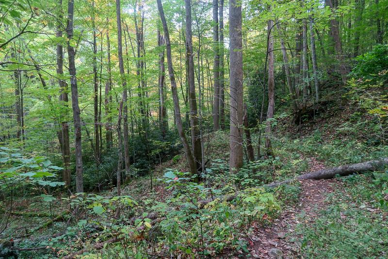 Haywood Gap Trail -- 3,760'