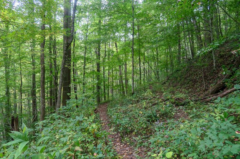 Haywood Gap Trail -- 3,820'