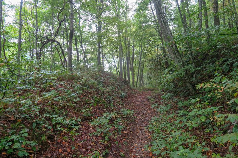 Haywood Gap Trail -- 3,680'