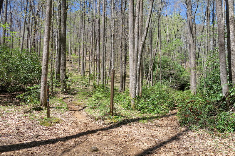 Horse Cove Gap/Cantrell Creek Trail Junction -- 2,850'