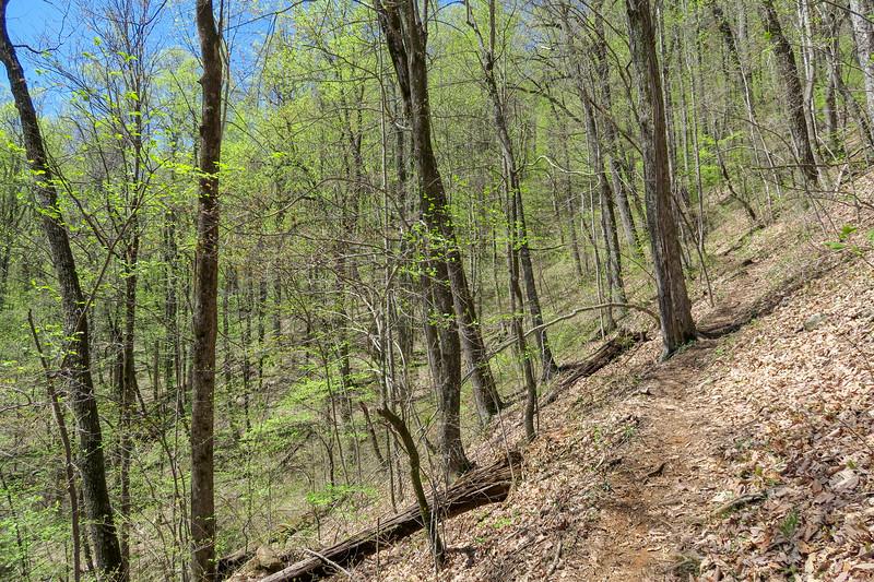 Horse Cove Gap Trail -- 3,300'