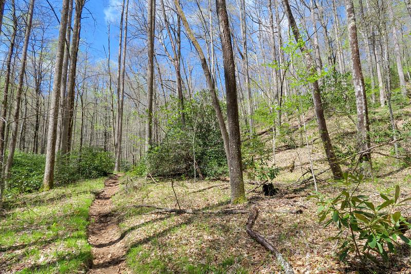 Horse Cove Gap Trail -- 2,900'