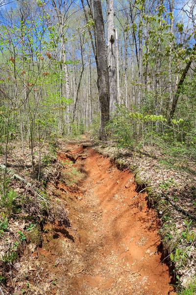 Horse Cove Gap Trail -- 3,000'