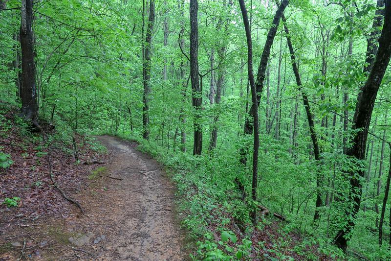 Ingles Field Gap Trail -- 2,720'