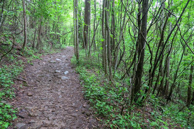 Ingles Field Gap Trail -- 2,550'