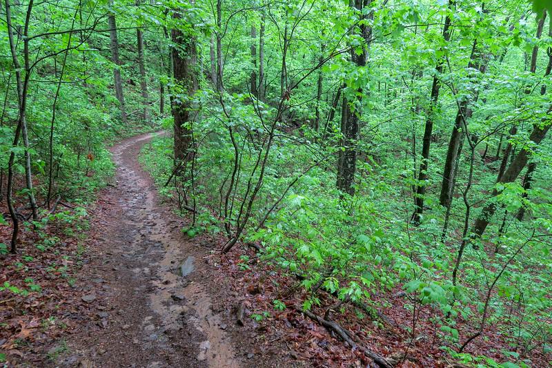 Ingles Field Gap Trail -- 2,600'