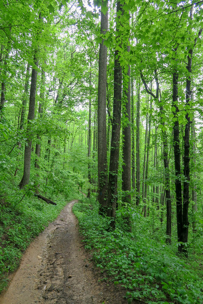 Ingles Field Gap Trail -- 2,580'