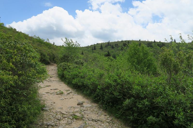 Ivestor Gap Trail -- 5,820'