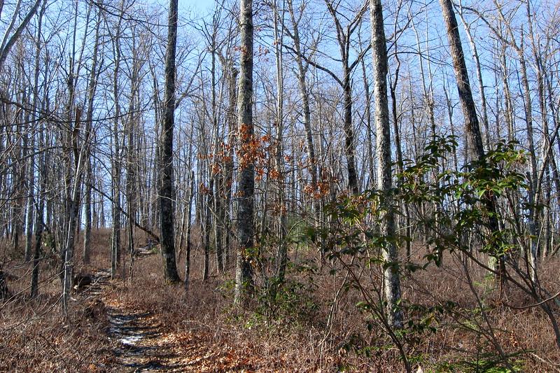 John Rock Trail -- 3,100'