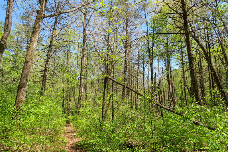 Laurel Creek Trail -- 2,440'