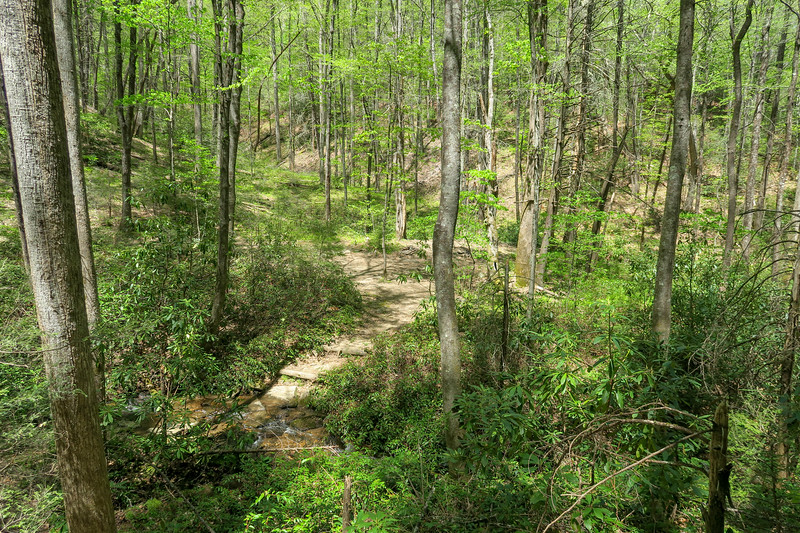 Laurel Creek Trail -- 2,770'