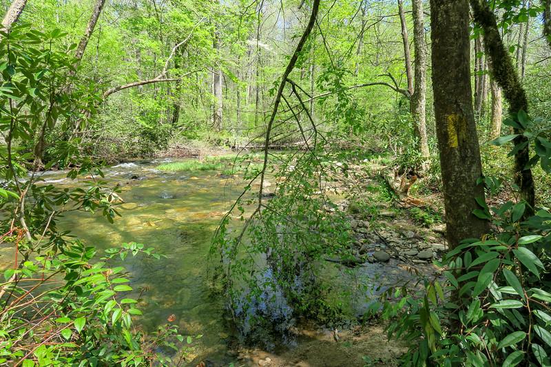 Laurel Creek Trail -- 2,420'