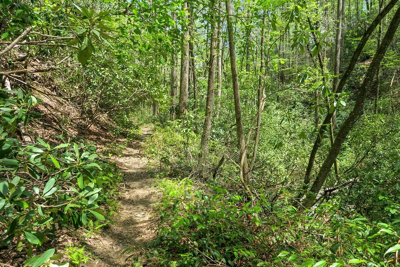Laurel Creek Trail -- 2,580'