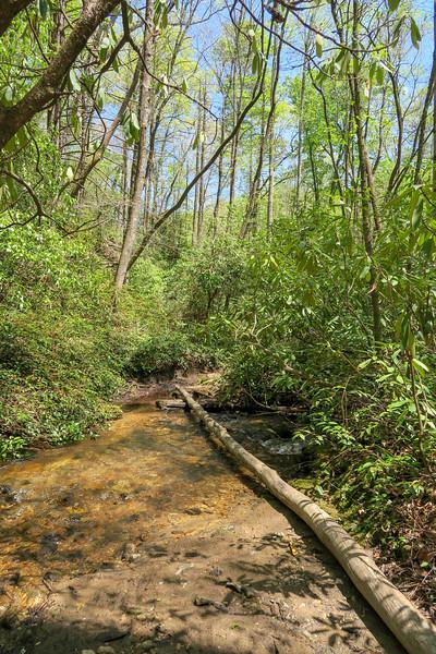 Laurel Creek Trail @ Laurel Creek -- 2,660'