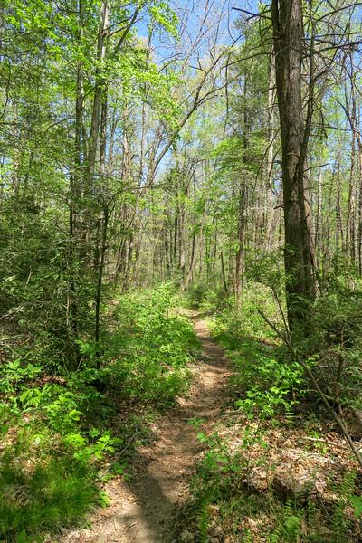 Laurel Creek Trail -- 2,480'