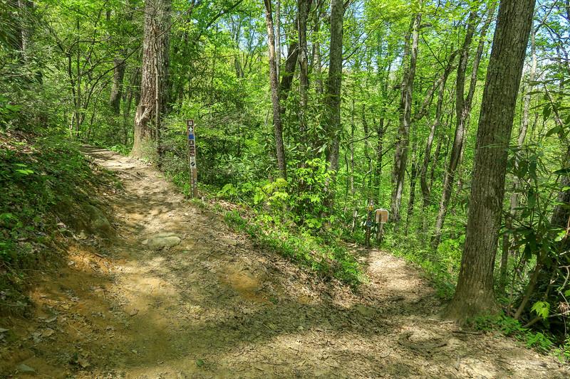 Laurel Creek/Squirrel Gap Trail Junction -- 3,050'