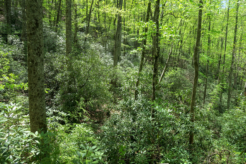 Laurel Creek Trail -- 2,850'