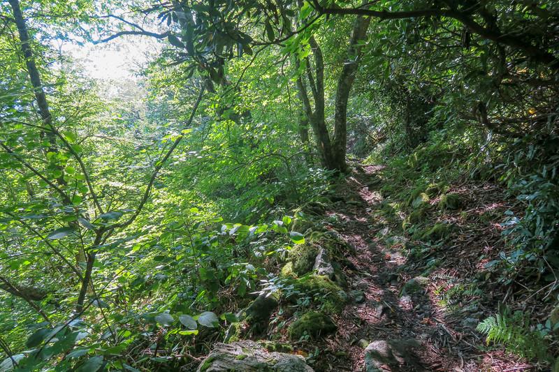 Laurel Mountain Trail -- 4,870'