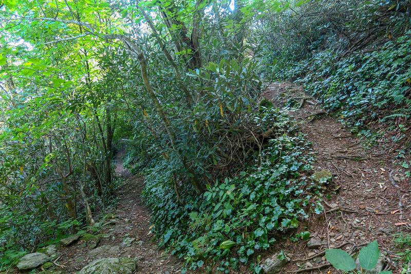 Laurel Mountain Trail -- 4,780'