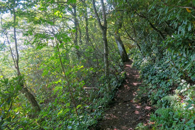 Laurel Mountain Trail -- 4,920'