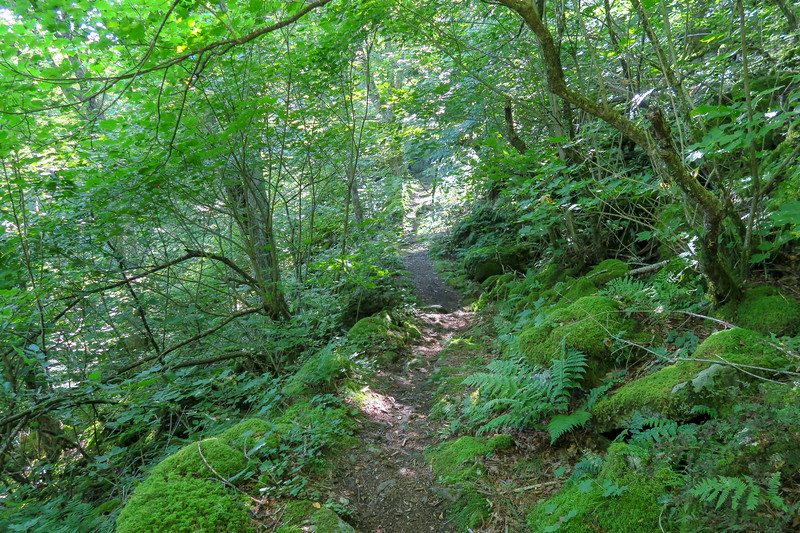 Laurel Mountain Trail -- 4,740'