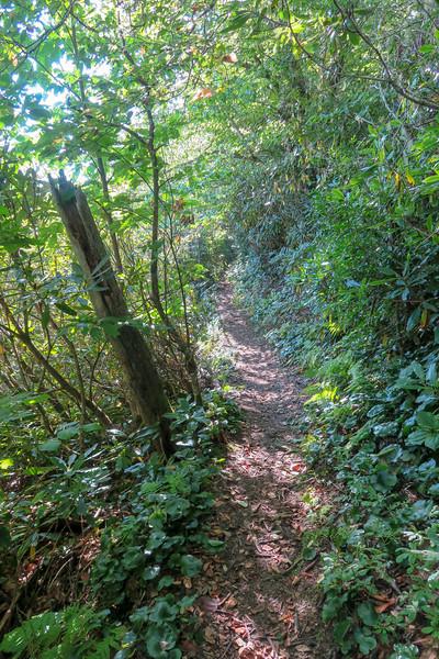 Laurel Mountain Trail -- 4,960'